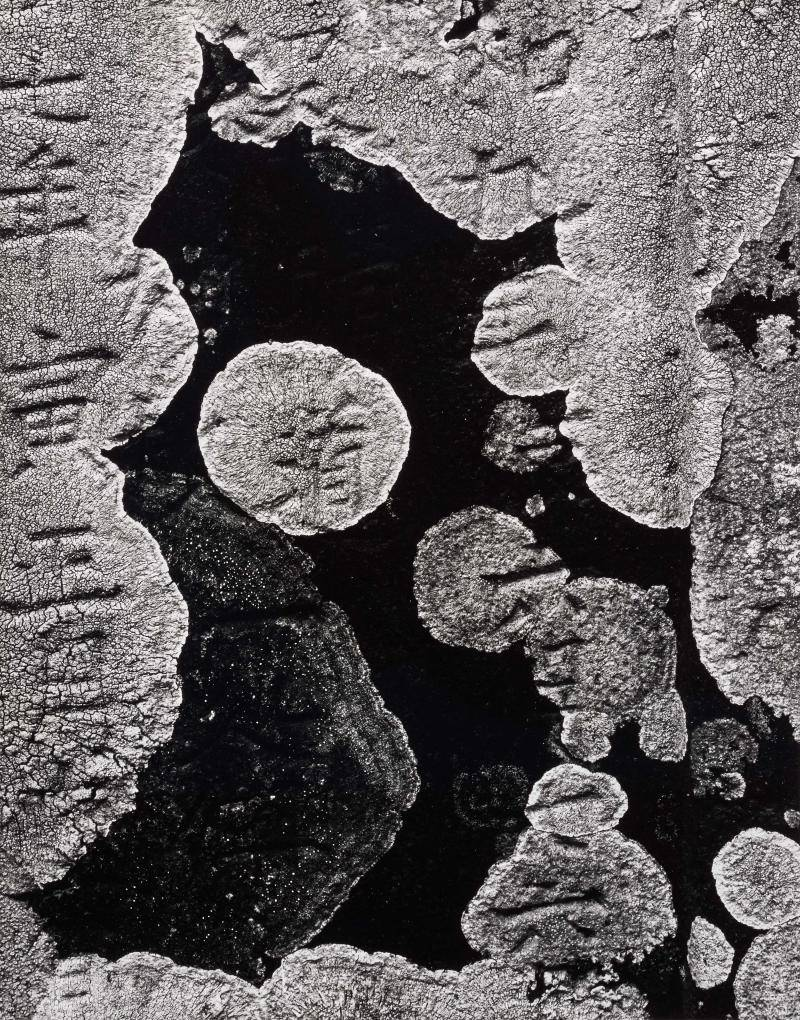 Black and white overhead photograph of stones and lichen